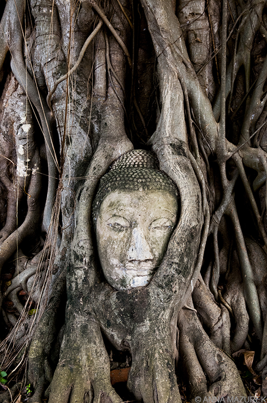 Photo Guide to Thailand: Ayutthaya Wat Mahathat Buddha Head